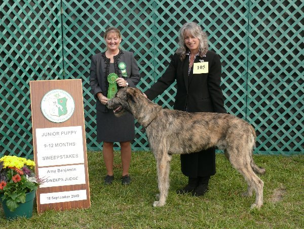 Sweeps Sr Puppy Dog - Dreamacres Maculagh