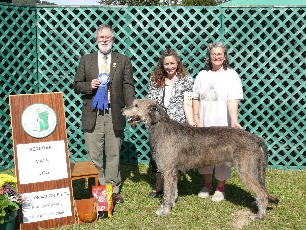 Veteran Dog - CH Knocknarea Venoble of Cnoccarne FCH