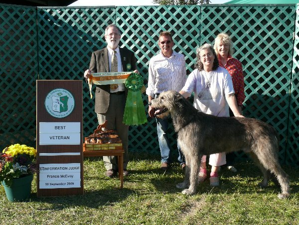 Best Veteran in Specialty - CH Knocknarea Venoble of Cnoccarne FCH