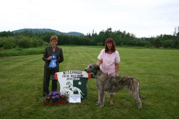 Sr Puppy Female - Starkeeper Glenamadda USA Flag