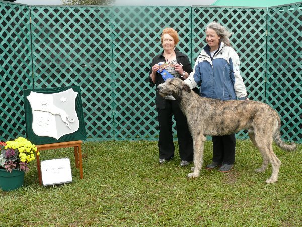 sr Puppy Dog - Dreamacres Maculagh