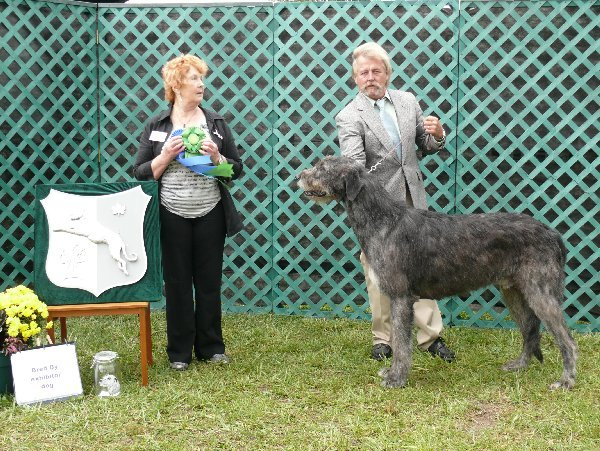 Bred by Exhibitor Dog - Nightwings Instigator