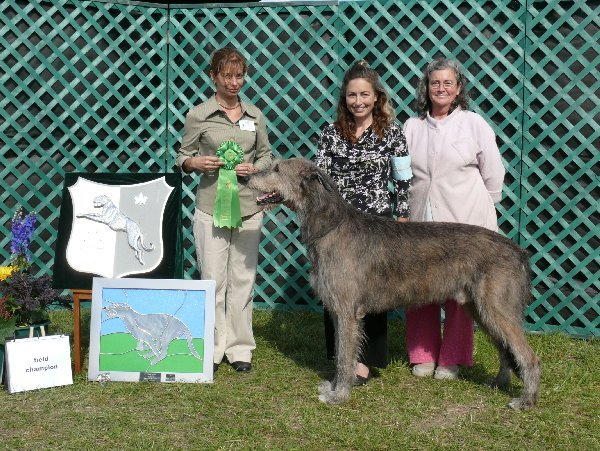 Best Field Champion - CH Knocknarea Venoble of Cnoccarne FCH