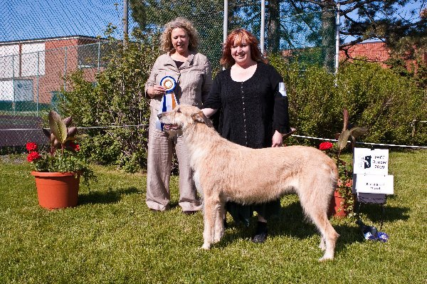 Altered Best of Breed - CH Karontara Starkeeper Charlston