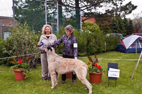 Bred by Exhibitor Dog - Taliesins Willows Glympse
