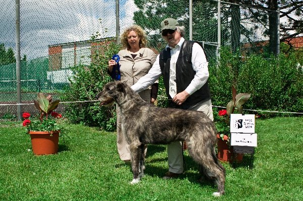 Bred by Exhibitor Bitch - Rockhart Katja