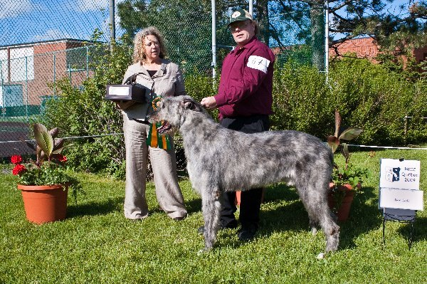 Best Gait - GCH Royeljokers Tiger on the Loose