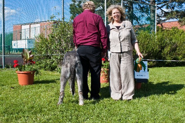 Best Hindquarters - GCH Royeljokers Tiger on the Loose