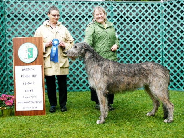 19-bred by exhibitor female