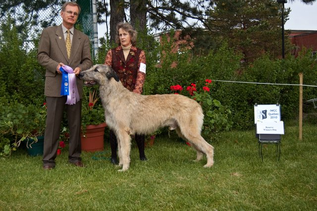 RWD, Best Bred by Exhibitor, BBE Dog - Taliesin's Willow's Glympse