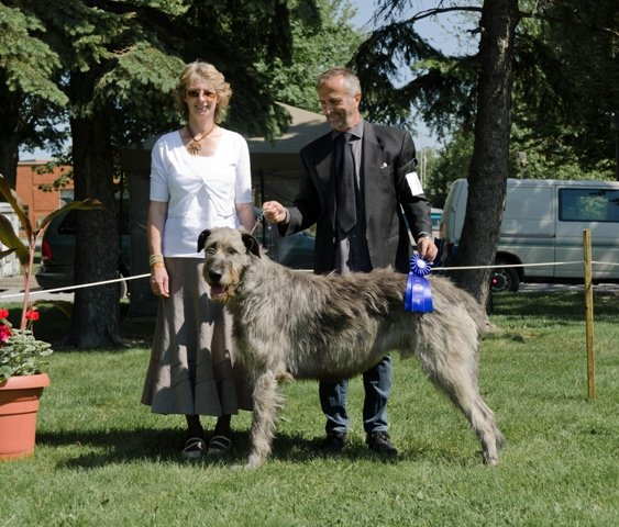 9qubec 2011male canadian bred
