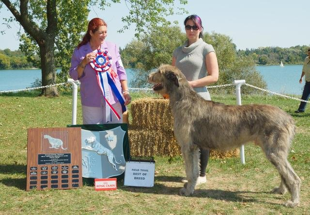 068-best-of-breed-field-trial