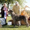 Best of Breed – CH Rochkart Heresy