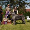 Best of Breed, Best Canadian Bred, BOW, WD, Open Dog - Wolfhaven Aint No Fool At O'Lugh
