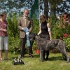 Best Puppy in Speciatly Show, Junior Puppy Bitch - Shanachie-N-Wolfhavens Dynamite